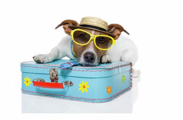 Brotas Eco Hotel Fazenda:  resort com parque só para cachorros