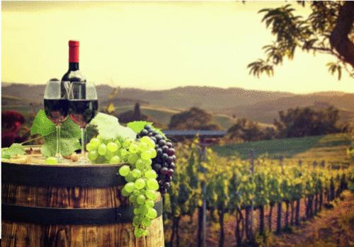 Enoturismo: turismo associado à cultura, tradição e apreciação de vinhos